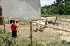 Kozy-na-farme