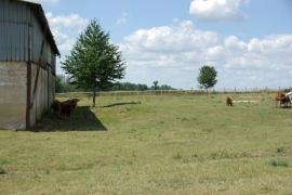 Kusok-tiena-na farme