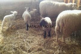 Ovcin-Budkovany-Farma