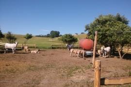 Zazemie-pre-zvierata-na-farme-Budkovany
